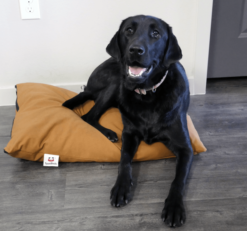 Nest Bedding SpotBed pet bed review