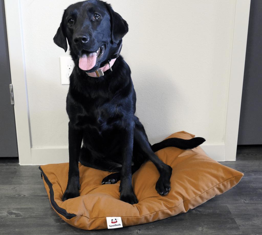 spotbeds pet bed sitting dog