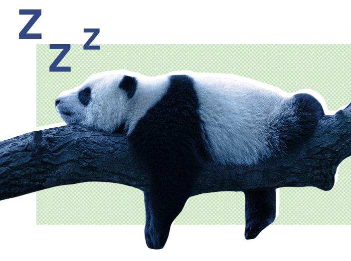 SO MiscArticleGraphics AnimalSleep