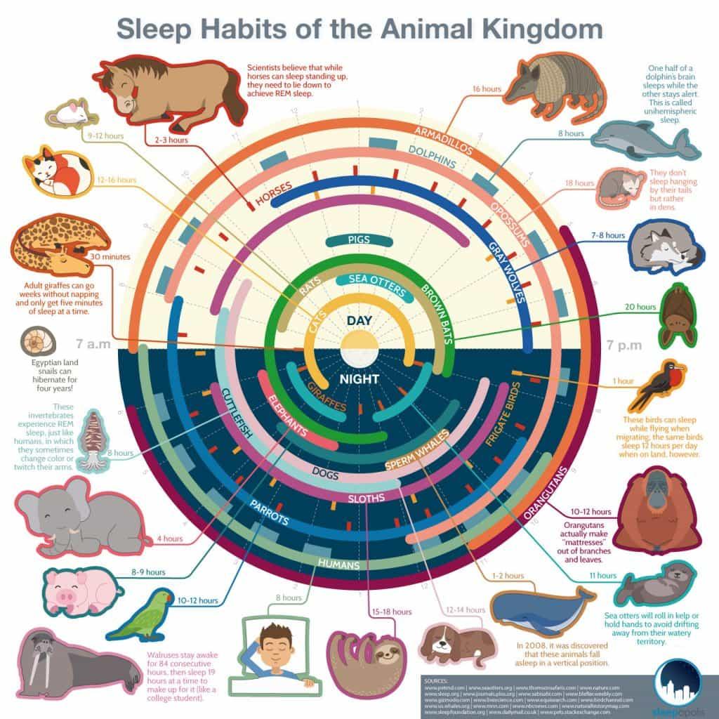 Sleep Habits of the Animal Kingdom