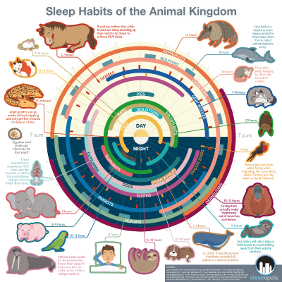 Sleep Habits of the Animal Kingdom Thumbnail