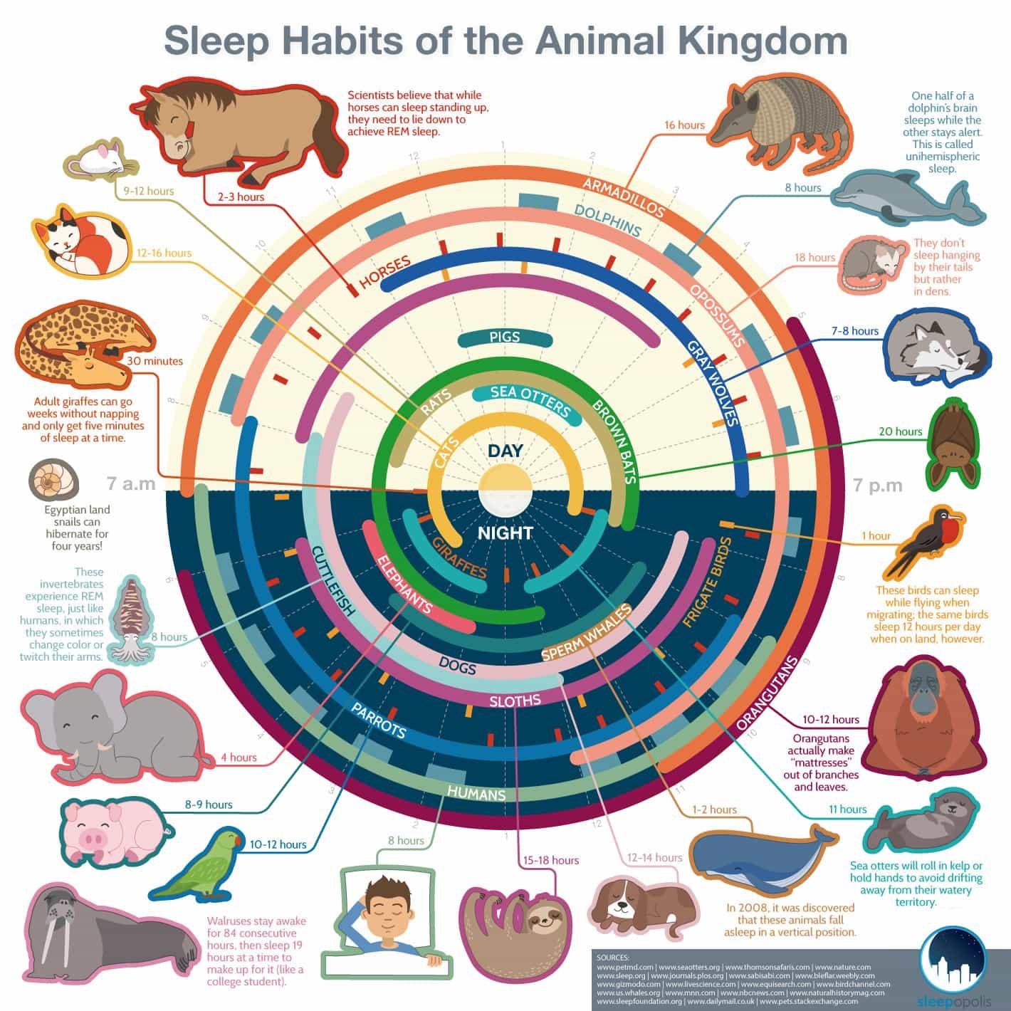 Sleep Habits of the Animal Kingdom - Sleepopolis.com - Infographic