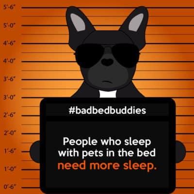 bad pets sleeping habits frenchie dog