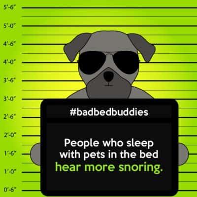 bad pets sleeping habits pug dog 1