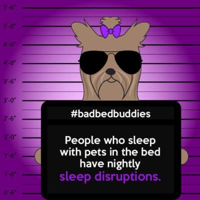 Dogs make sleep worse