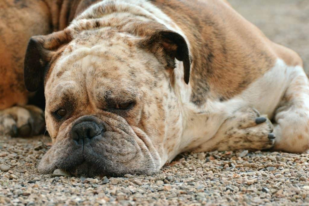 dog-1639528_1280-1024x682 Can Your Dog Help You Sleep?