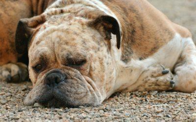 Can Your Dog Help You Sleep?
