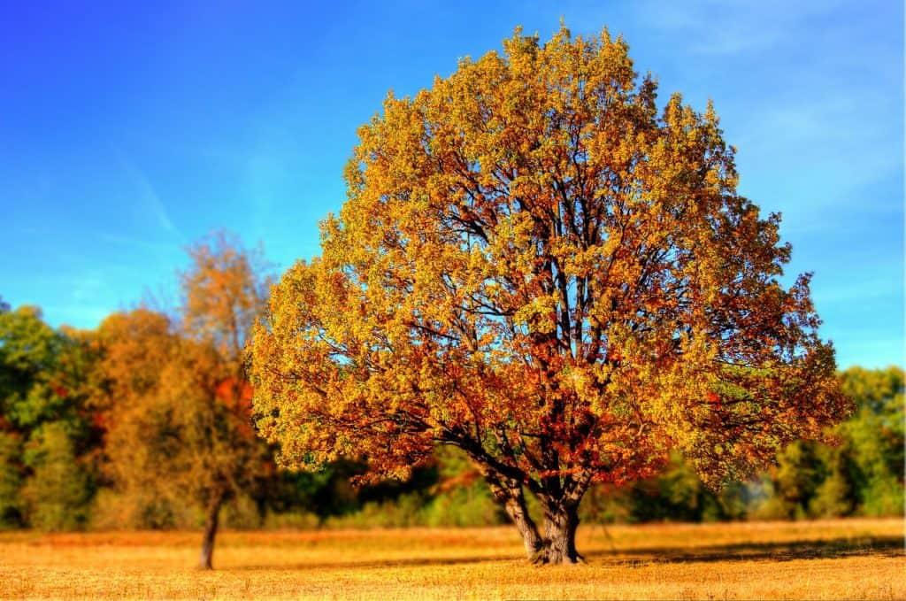 tree 99852 1280