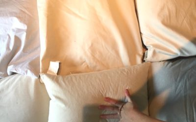 Do buckwheat pillows attract bugs?