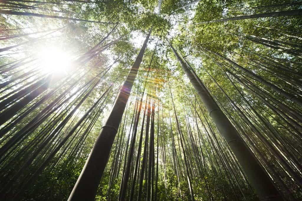 bamboo 364112 1280