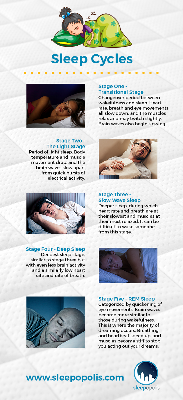An infographic outlining the different stages of sleep and sleep cycles