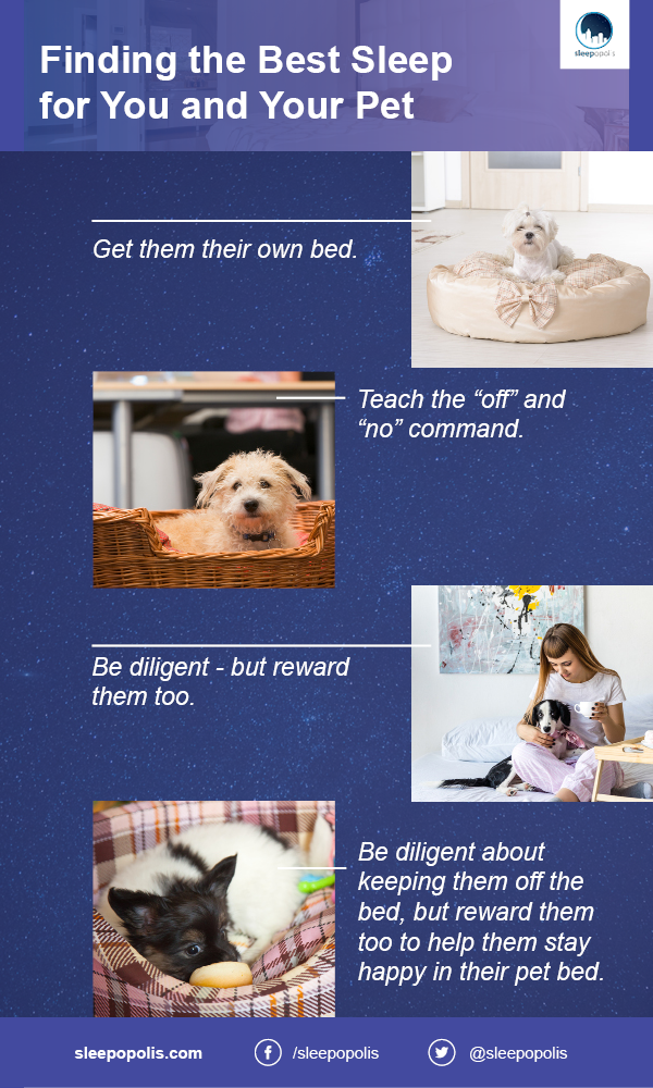 Do pets disrupt your sleep