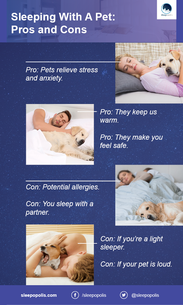 What are the downsides of co-sleeping with a pet