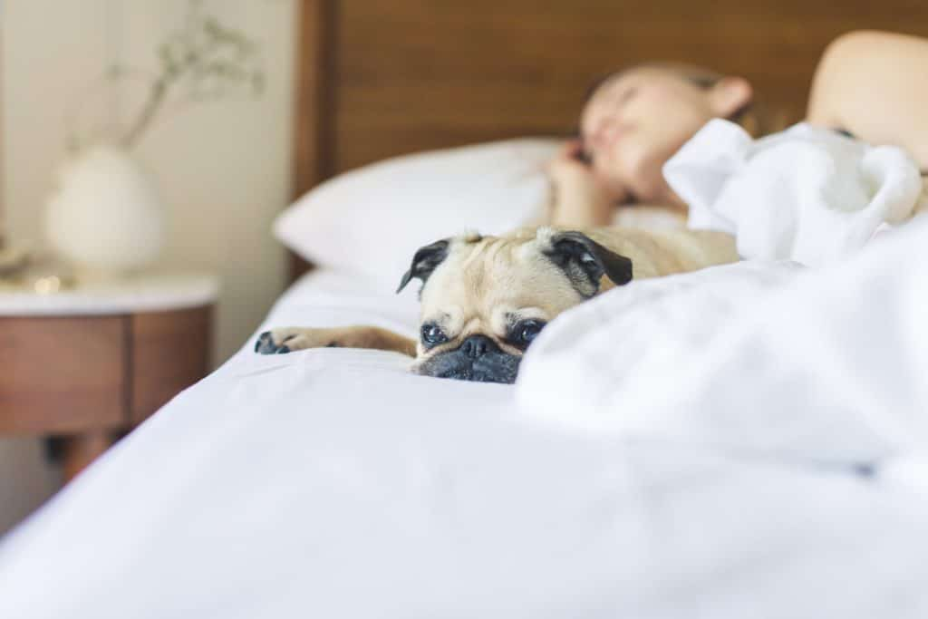 bed-bedroom-blanket-545017-1024x683 Why Do We Dream? New Research Might Have the Answer