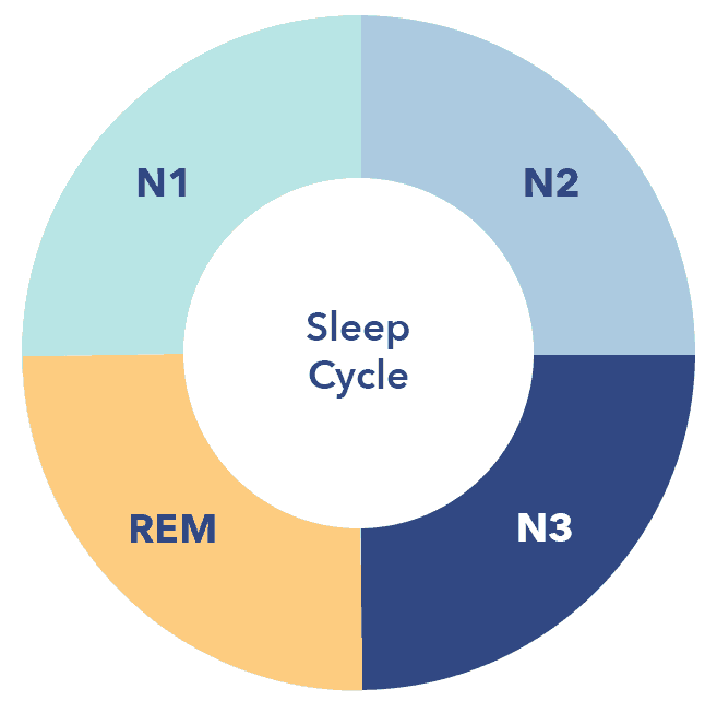 Sleep Education article, 4 stages graphic, sleep cycle