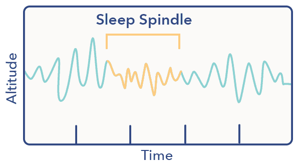 Sleep spindle graphic, N2 article, Sleep A-Z