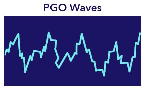 PGO Waves in REM Sleep