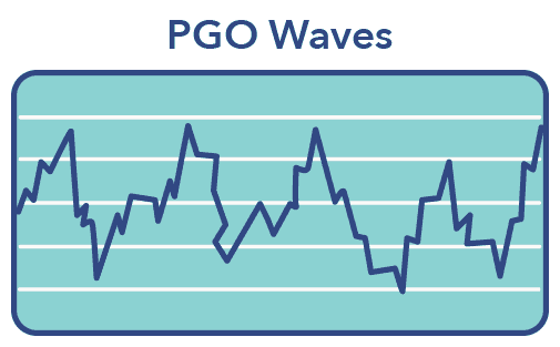 PGO waves graphic, REM sleep article