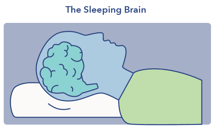 Sleep A-Z. Sleep and the brain article graphic