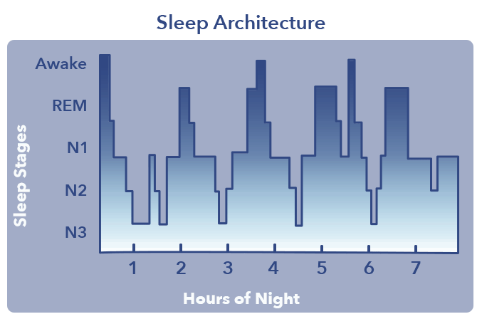 What is Sleep? article graphic, sleep architecture