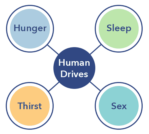 What is Sleep, the four drives graphic