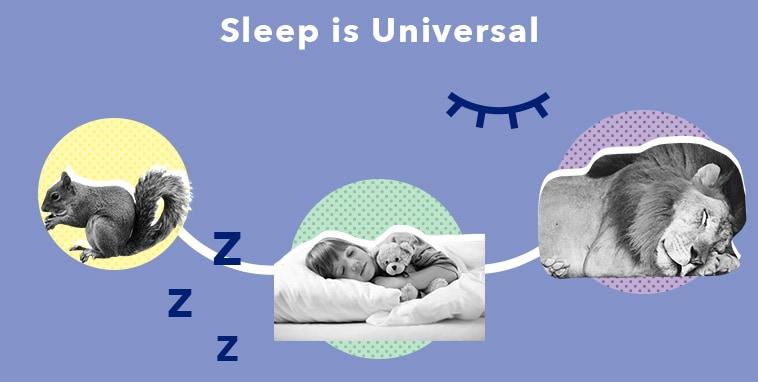 SO SleepEdu WhatisSleep Universal