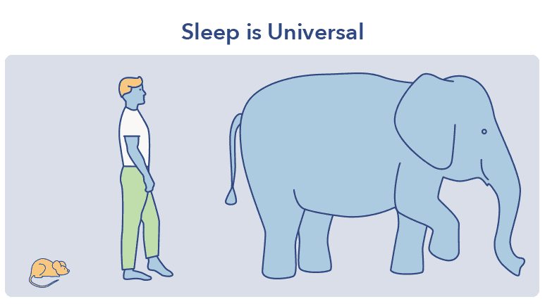 Elephant graphic, What is Sleep article