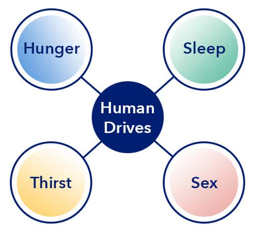 Human Drives