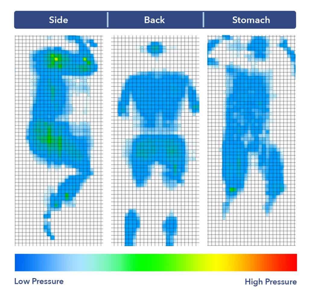 Leesa Hybrid mattress pressure map
