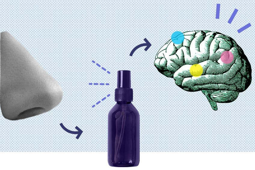 Aromatherapy Human Sense of Smell