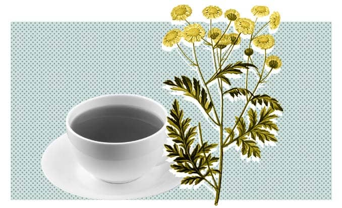 Chamomile plant and tea graphic