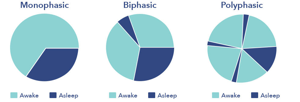 Sleep Phases Infographic