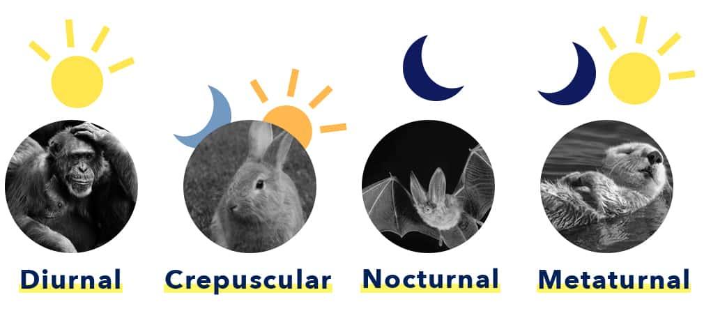 Types of Sleep Behaviors in Animals