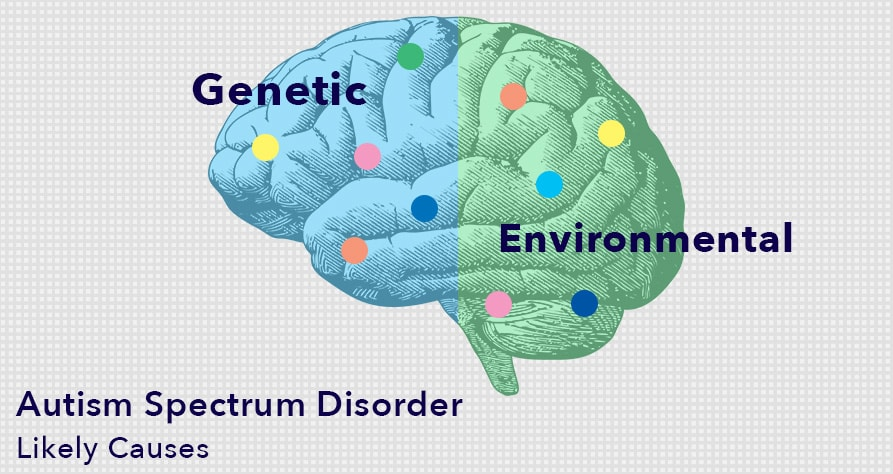 Genetic and Environmental Factors May Cause Autism