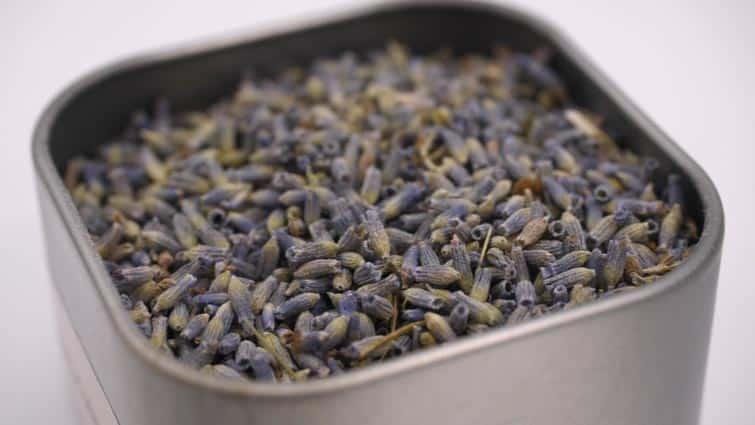 lavender buds close-up